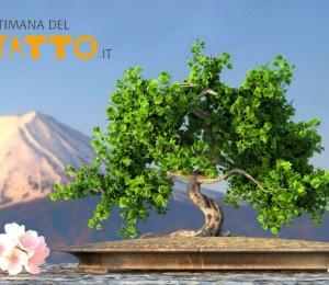 Settimana del Baratto Abruzzo